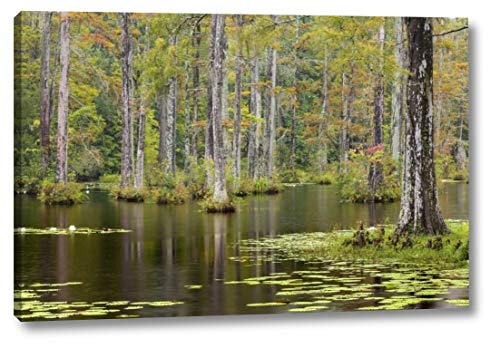South Carolina Lily Pads in Cypress Swamp by Don Paulson - 24