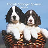 English Springer Spaniel Puppies 2008 Mini (German, French, Spanish and English Edition)
