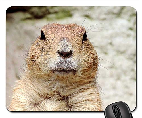 Mouse Pad - Marmot Rodent Croissant Mankei Gophers Animal Head ()