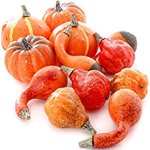 Factory Direct Craft 12 Assorted Harvest Red and Orange Artificial Pumpkins and Gourds