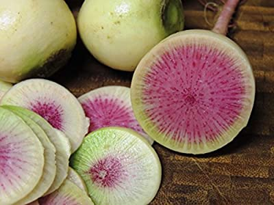 250+ Radish Seeds- Watermelon- Heirloom Variety by Ohio Heirloom Seeds