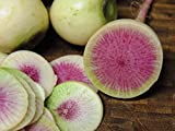 buy 250+ Radish Seeds- Watermelon- Heirloom Variety by Ohio Heirloom Seeds now, new 2019-2018 bestseller, review and Photo, best price $1.99