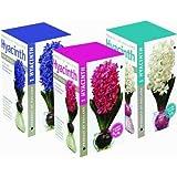 12-Pack Hyacinth Flower Bulb Kit