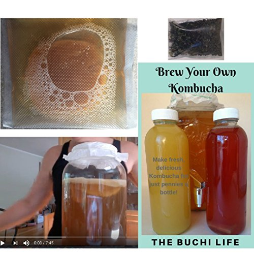 SCOBY Organic Kombucha Starter Kit Includes e-Book & Video Series, Our Premium Tea Blend. Brew Your Own with The Buchi Life. Exceptional Customer - How Glasses You Scratches Of Out Get Do
