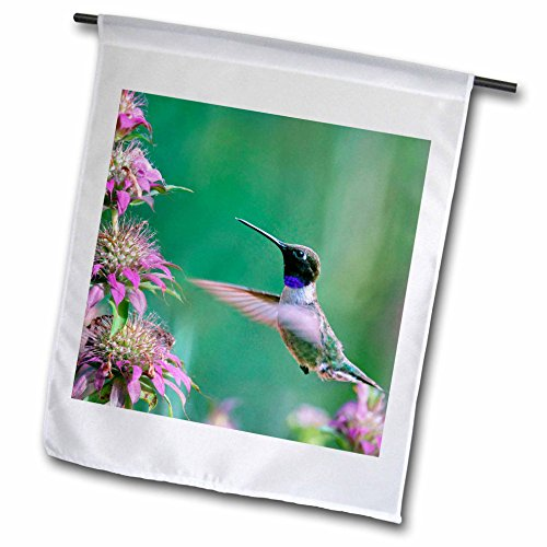 3dRose Danita Delimont - Hummingbirds - Black-chinned Hummingbird drinking nectar at a bee balm, Texas, USA.  - 18 x 27 inch Garden Flag (fl_260182_2)