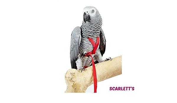 Aventura pájaro arnés pequeño negro: Amazon.es: Productos para ...
