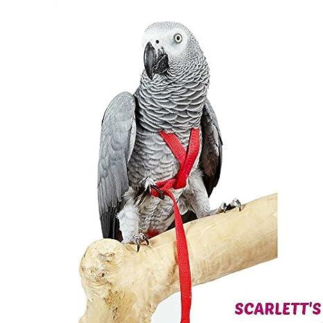 Aventura pájaro arnés, tamaño mediano, color rojo: Amazon.es ...