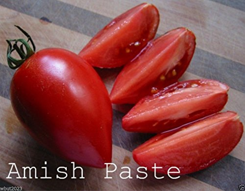 Tomato, Amish Paste ~ Heirloom-from the Amish Here in Pennsylvania ~ 100 Seeds! (Amish Paste Tomato Seeds)