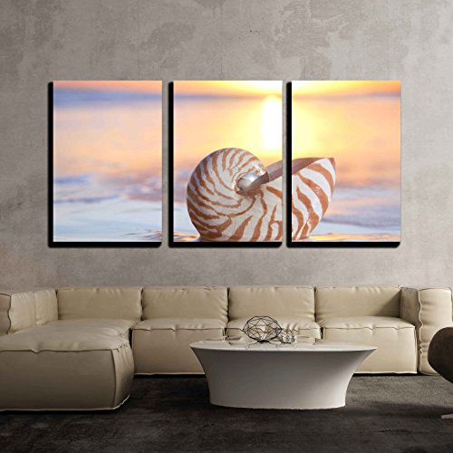 Nautilus 3 Piece (wall26 - 3 Piece Canvas Wall Art - nautilus shell in the sea , sunrise. shallow dof - Modern Home Decor Stretched and Framed Ready to Hang - 24