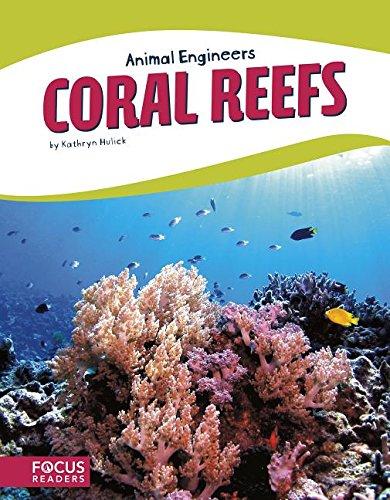 Coral Reefs (Animal Engineers) (Star Coral Polyp)
