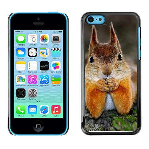 Omega Case PC Polycarbonate Cas Coque Drapeau - Apple iPhone 5C ( Cute Squirrel )