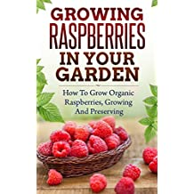 Growing Raspberries In Your Garden - How To Grow Organic Raspberries, Growing and Preserving: Canning, Preserving Berries, Backyard Berries, Square Foot Gardening, Square Foot, Own Berries, Raspberry