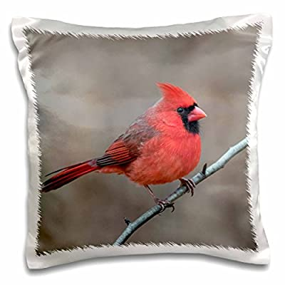 3dRose Danita Delimont - Birds - Male Northern Cardinal in winter, Cardinals cardinals, Kentucky - Pillow Case