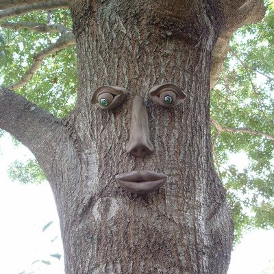 Simon Tree Face (Tree Faces)