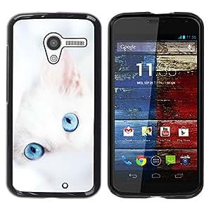 Paccase / SLIM PC / Aliminium Casa Carcasa Funda Case Cover para - Cute White Kitten Winter Clean Baby Blue - Motorola Moto X 1 1st GEN I XT1058 XT1053 XT1052 XT1056 XT1060 XT1055