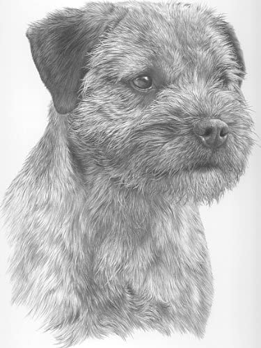 PICTURE LARGE STUNNING BORDER TERRIER DOG DRAWING  PRINT