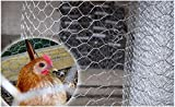 MTB Galvanized Hexagonal Poultry Netting,Chicken