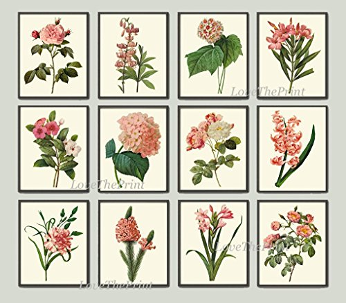 Beautiful Pink Lilies (Botanical Art Print Set of 12 Antique Beautiful Redoute Flowers Pink Coral White Rose Gladiolus Lily Hydrangea Carnation Hyacinth Garden Home Room Decor Wall)