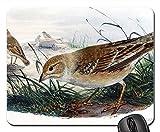 Mouse Pads - Brown Thrasher Bird Wildlife Outdoors Songbird