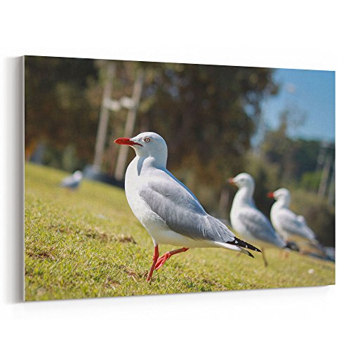 Gull Sea Trio (Westlake Art - Seagulls Bird - 12x18 Canvas Print Wall Art - Canvas Stretched Gallery Wrap Modern Picture Photography Artwork - Ready to Hang 12x18 Inch (4376-F6E50))