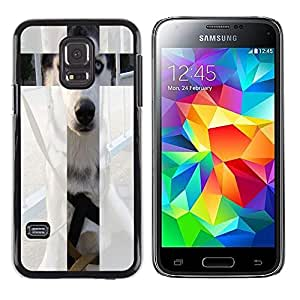 Dragon Case - FOR Samsung Galaxy S5 Mini, SM-G800 - I look cute - Caja protectora de pl??stico duro de la cubierta Dise?¡Ào Slim Fit
