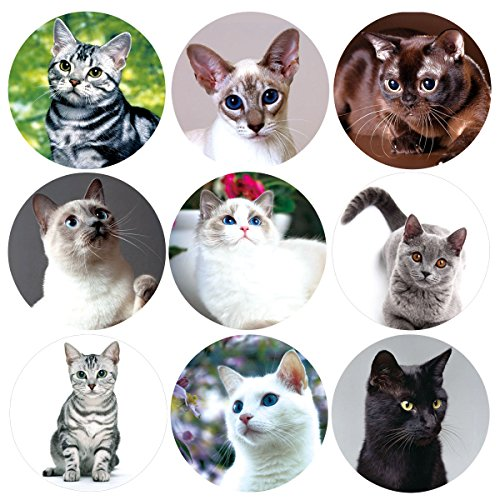 200 Pcs Realistic Cute Cat Stickers Kitten Roll Sticker for Party School Decoration Reward Sticker