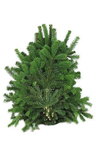 Nordmann Tanne Zweige 5kg,Dekoration,Weihnachtsdeko,Basteln