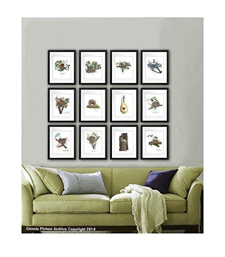 Bird Nest Bird Eggs Woodland Decor Wall Art Unframed Set of 12 Art Prints Living Room Decor