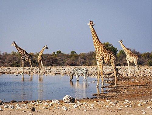 African Waterhole Camera - 1