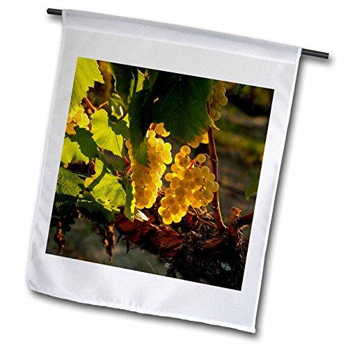 3dRose Danita Delimont - Vineyards - Usa, Washington, Yakima Valley. Harvest in the French Creek vineyard. - 12 x 18 inch Garden Flag (fl_260519_1) ()
