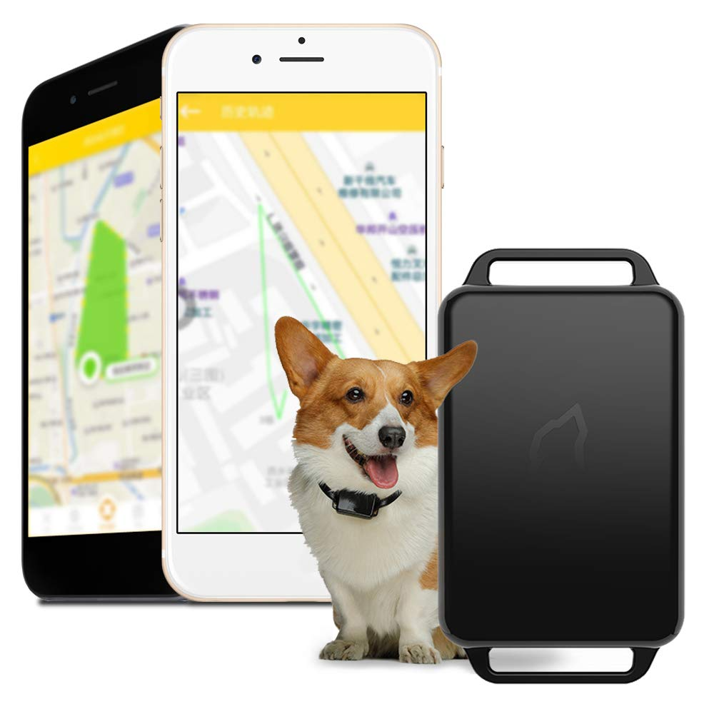 Decdeal Smart Pet Tracker GPS Locator Pet GPS Tracker Pet Outdoor Waterproof IP67Real Time Activity Monitor Portable APP Control for Dogs by Decdeal