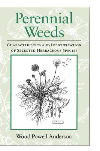 Perennial Weeds: Characteristics and Identification of Selected Herbaceous Species
