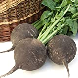 David's Garden Seeds Radish Black Spanish Round SL1133 (Black) 200 Non-GMO, Heirloom Seeds