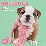 Bulldogs 2020 Square Wall Calendar (Studio Pets)