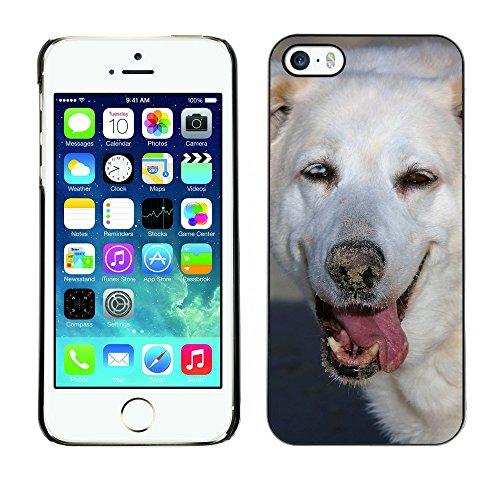 Premio Sottile Slim Cassa Custodia Case Cover Shell // F00013724 chien // Apple iPhone 5 5S 5G