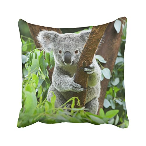 ecorative Throw Pillow Cover Polyester Gray Animal Koala Bear In The Zoo Cute Australia Australian Tree Brisbane Wildlife Pouch Cushion Two Sides Pillow Case Square Print For Home ()