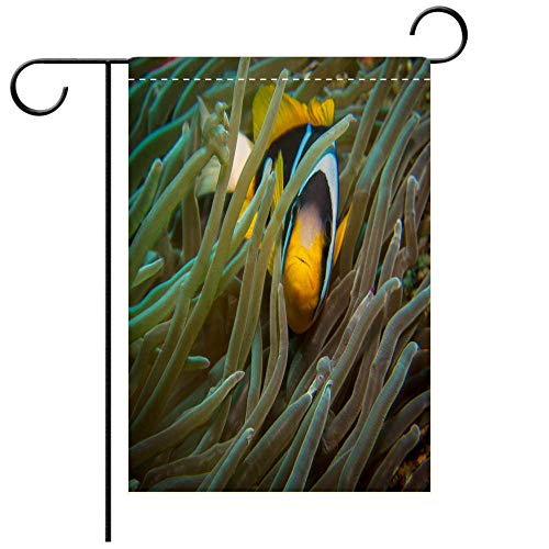 BEICICI Custom Personalized Garden Flag Outdoor Flag Clown Fish (Two bar Anemone Fish) in an Anemone Best for Party Yard and Home Outdoor Decor