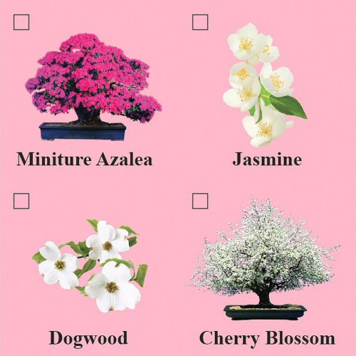 Eve 39 S Cherry Blossom Bonsai Seed Kit Flowering Complete