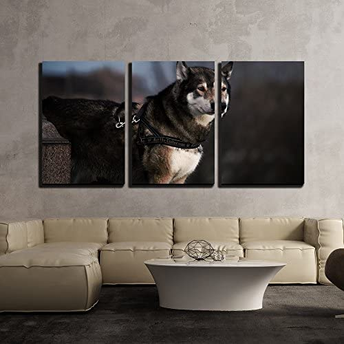 Portrait Swedish Elkhound Dog x3 Panels