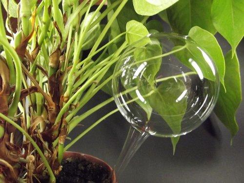12 Stück, Durstkugel / Bewässerungskugel ca. 9 cm Lauscha