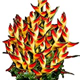 100/50 PCS Heliconia Seeds Rare Flower Seeds Home Garden Bonsai Potted Plant Seeds