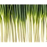 Tokyo Long, White Bunching, Green Onion(1000 Seeds), Plant Spring/summer or Fall.