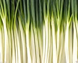 green onion bulbs - Tokyo Long, White Bunching, Green Onion(1000 Seeds), Plant Spring/summer or Fall.