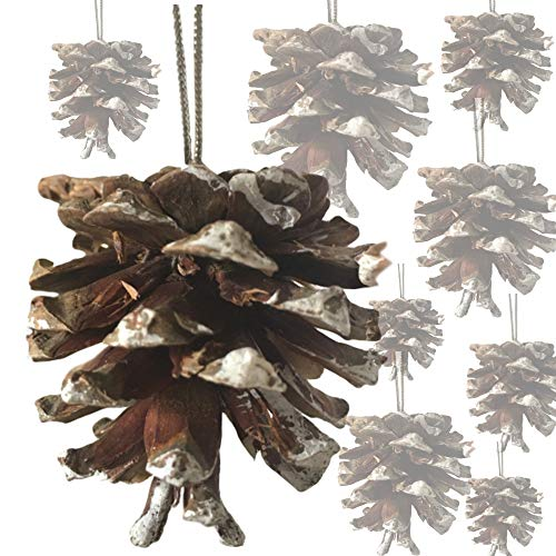 Pine Cone Christmas Tree Ornaments (BANBERRY DESIGNS White Tipped Pinecones - Bag of Approx. 30 Real Pine Cone Ornaments Assorted Sizes - Frosted Tips Strings - Rustic Natural Small Pinecones Bulk - Fall Christmas -)