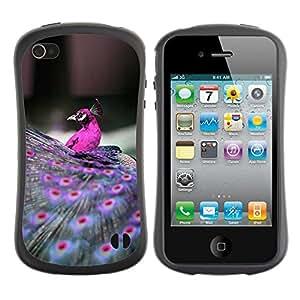 Suave TPU GEL Carcasa Funda Silicona Blando Estuche Caso de protección (para) Apple Iphone 4 / 4S / CECELL Phone case / / peacock bird purple feathers vibrant /