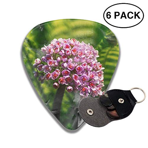 Celluloid Guitar Picks 3D Printed Fern Bokeh Flower Plant Best Guitar Bass Gift For - Fern Printed
