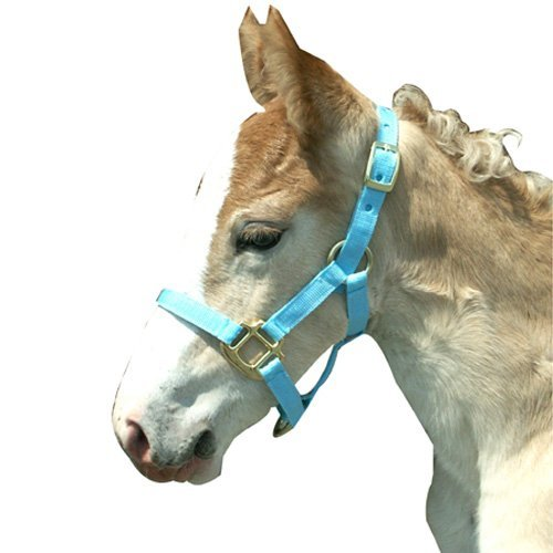 Intrepid International Foal Halter, Light Blue ()