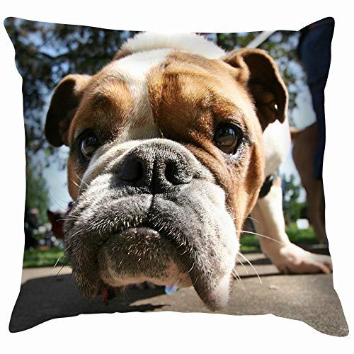 Cute Bulldog Animals Wildlife Dog Parks Outdoor Throw Pillow Case Cushion Cover Pillowcase Watercolor for Couch 18X18 Inch]()