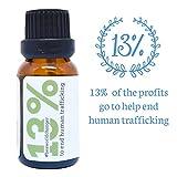 Wintergreen-Essential-Oil-by-Simply-Earth-15-ml-100-Pure-Therapeutic-Grade