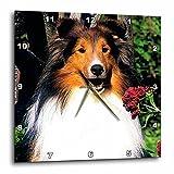Dogs Sheltie/Shetland Sheepdog – Shetland Sheepdog – 15×15 Wall Clock (dpp_639_3) For Sale